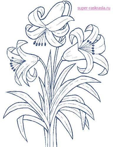 Раскраски цветы | Картинки с цветами для раскрашивания, а также ...